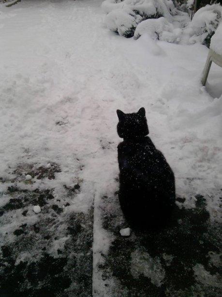 zeno in the snow